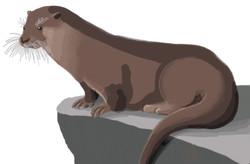 fauna otter