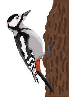 fauna woodpecker.jpg