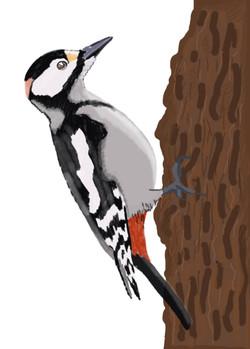 fauna woodpecker