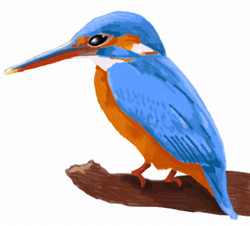 fauna king fisher