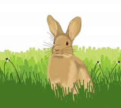 fauna rabbit