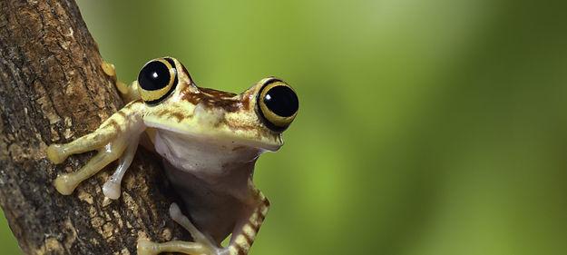 Frog image as strip.jpeg