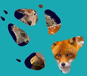 CUAN wildlife rescue wildlife artist.jpg