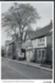 Belle Vue Tavern horse chestnut.jpg