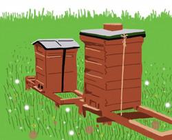 fauna bee hives
