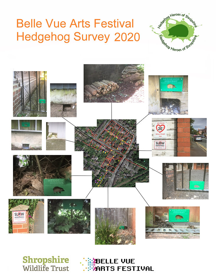 Hedgehog - Shropshire Wildlife Trust3.jp