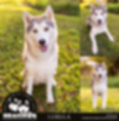 Luella Facebook and Website 900px.jpg