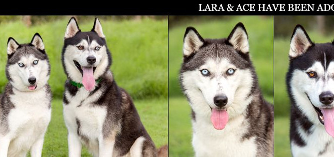 LARA & ACE have found their furrytail ending!