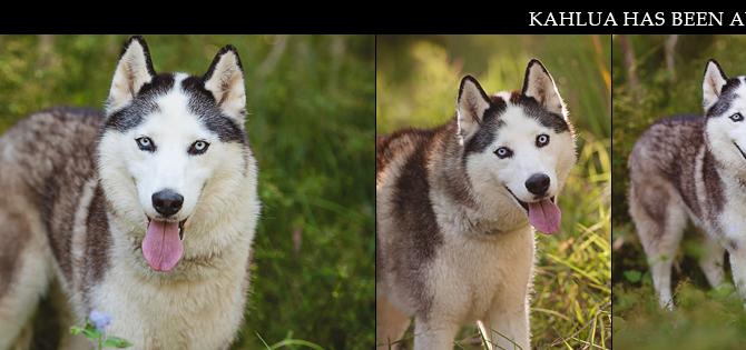 KAHLUA has found her furrytail ending!