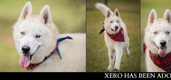 XERO has found his furrytail ending!!