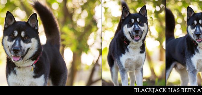 BLACKJACK has found his furrytail ending!
