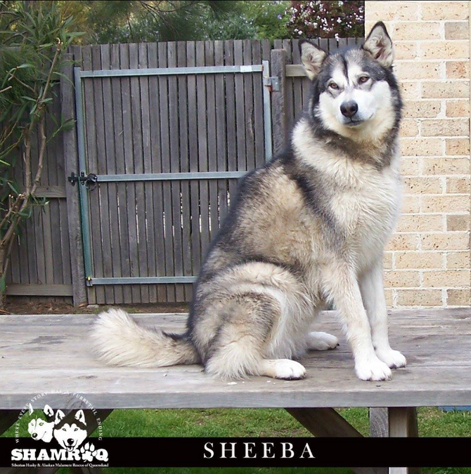 SHEEBA has found her furrytail ending!