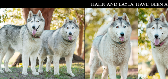 HAHN & LAYLA have found their furrytail ending!