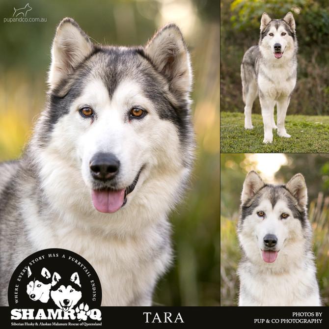 TARA has found her furrytail ending!