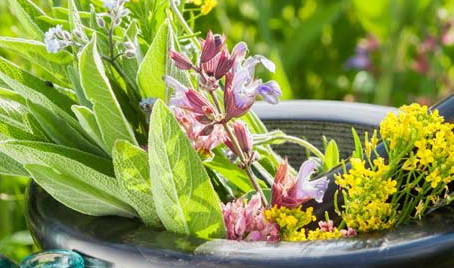 Какие лекарственные растения стоит выращивать в своем саду.