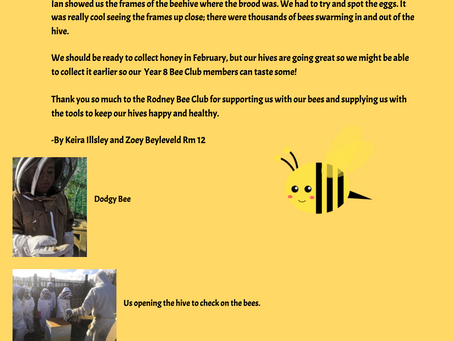 Getting to know our bees