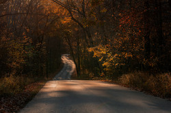 Road in Brown County State Park, Indiana in Autumn