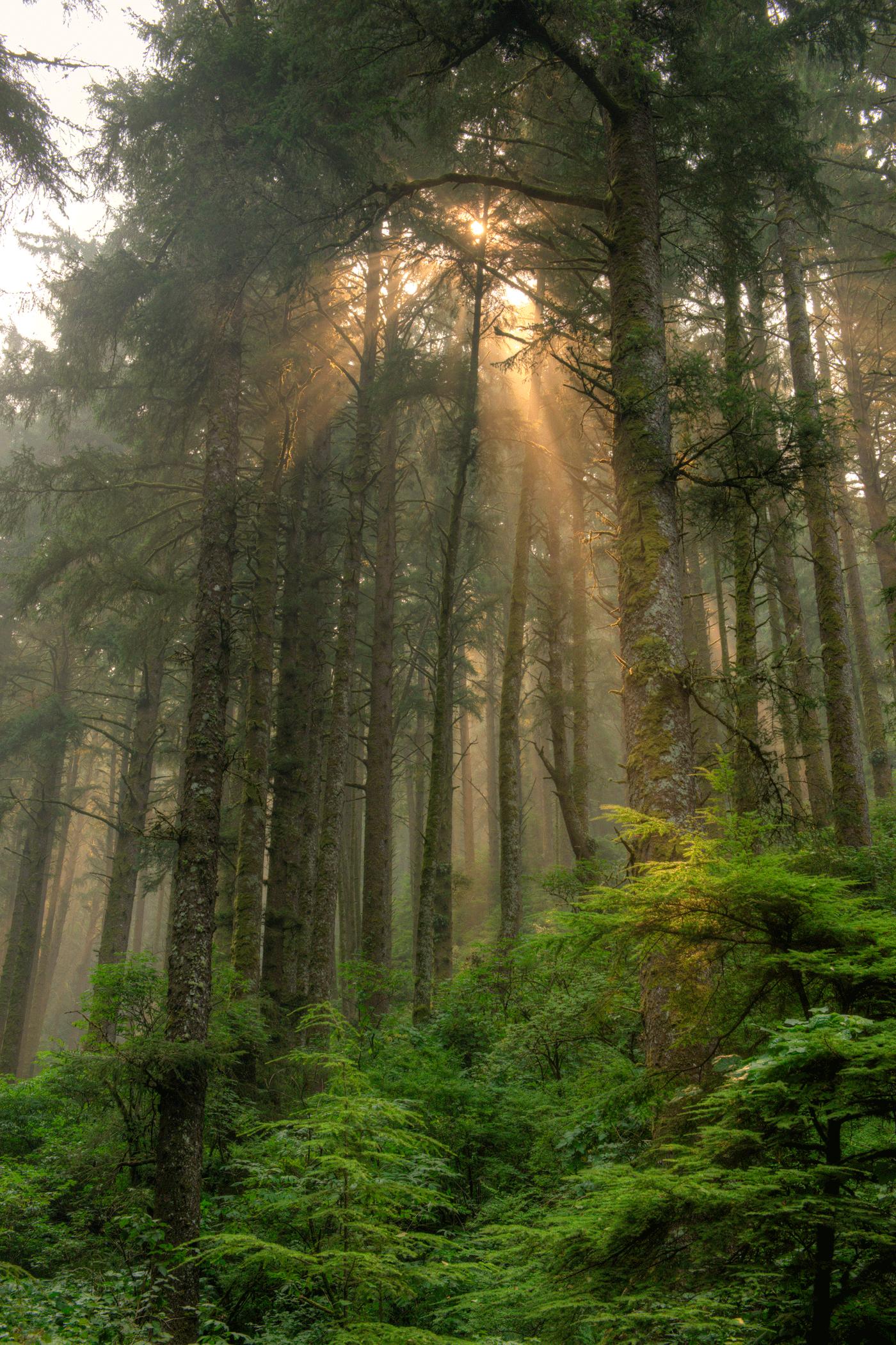 Siuslaw Light Rays