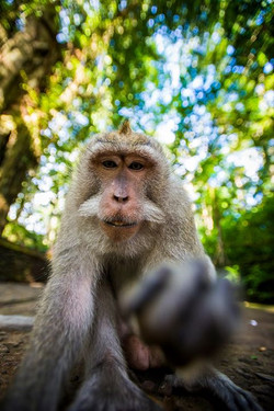 At the Monkey Forest in Ubud, Bali. This guy messed up my glass by smearing his dirty fingers all ov