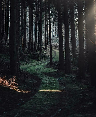 path long walk.jpg