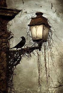 Raven for Never.jpg