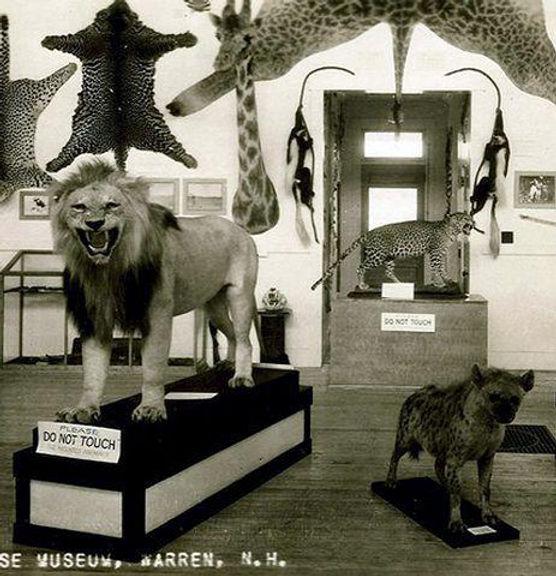morse museum.jpg