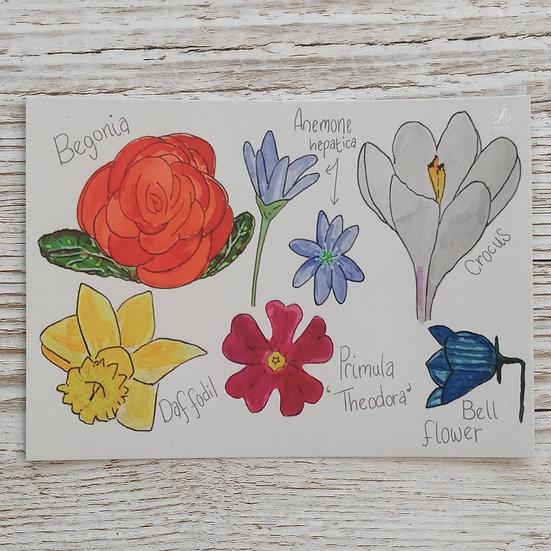 Floral Watercolour Postcard Print