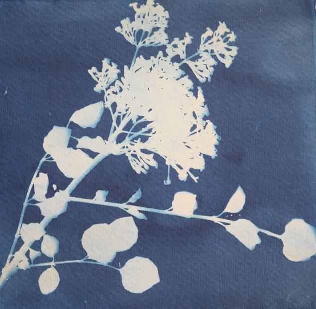 Nature print - Fae Kilburn