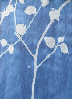 Lucinda's Tree, C-type print