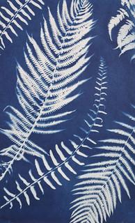 Ferns, C-type print