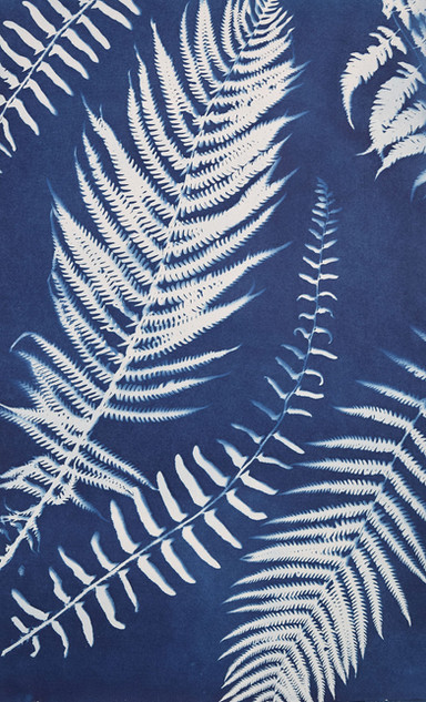 Ferns, C-type print