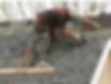 DG Platts & Sons Roofing Contractors - Loughborough - 01509 213 604 - 07951 968
