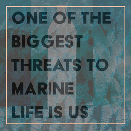 """One of the biggest threats to marine life is us.""    - Dr. Kate Charlton-Robb, Australian Marine Mammal Conservation Foundation"