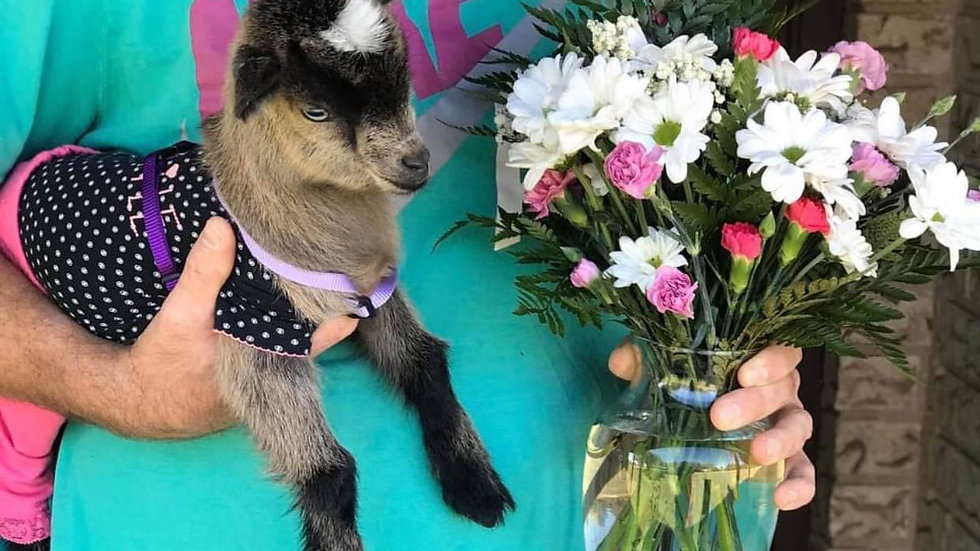 Mother's Day Goat-A-Gram