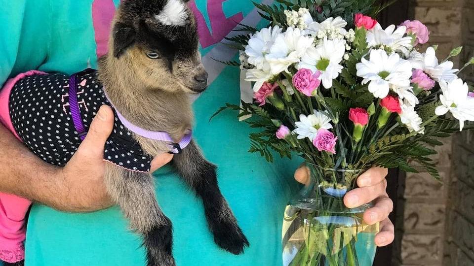 Killeen Goat-A-Gram