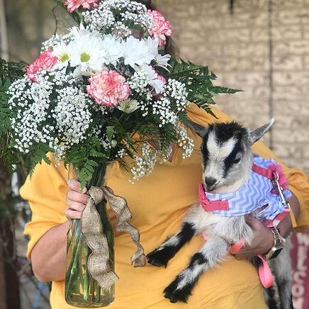 goat a gram 2.jpg