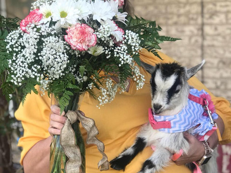 You Can Now Send Someone A Goat Visit in Waco