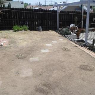 back yard v.jpg