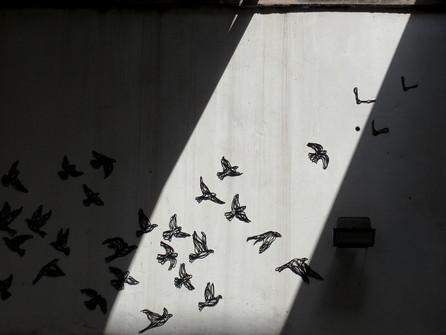 black birds (close up)