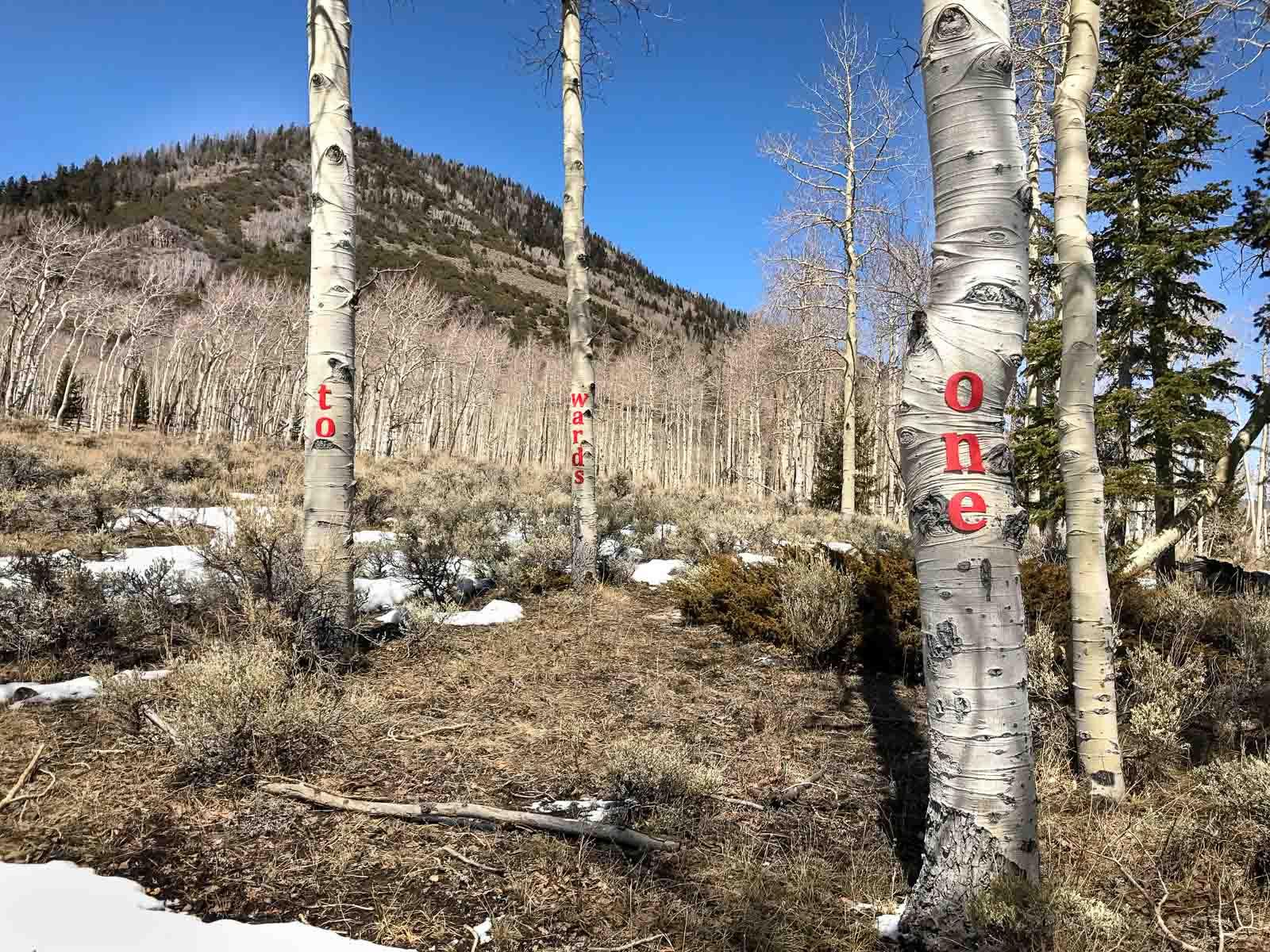 Pando Forest, Utah, 2018
