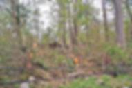 Wilton_Tornado_PathThroughTrees©2020Law