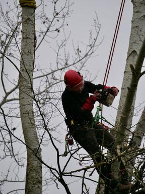 Taille arbre Pottu&Seitz SA
