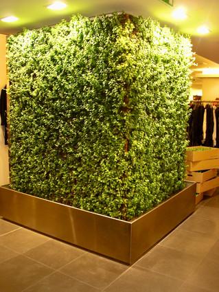 Mur végétalisé intérieur | Pottu&Seitz SA
