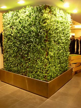 Mur végétalisé intérieur   Pottu&Seitz SA