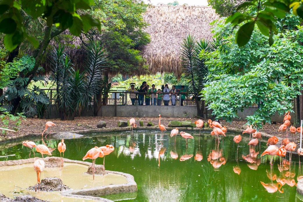 Jardín Botánico Joaquin A. Uribe