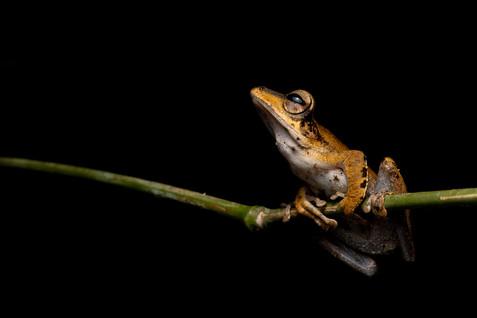 Frog sp.
