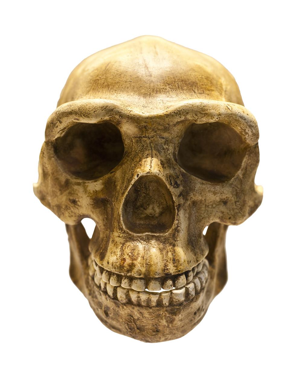 Jungleroots Orthodontics Ahwatukee, Phoenix