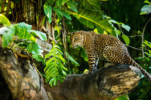11 Unusual Animals of Tarzan's African Jungle