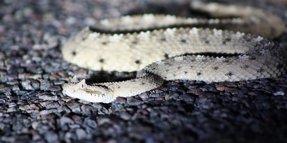 Level 1 Venomous Course - Amphibian Foundation - Atlanta, GA