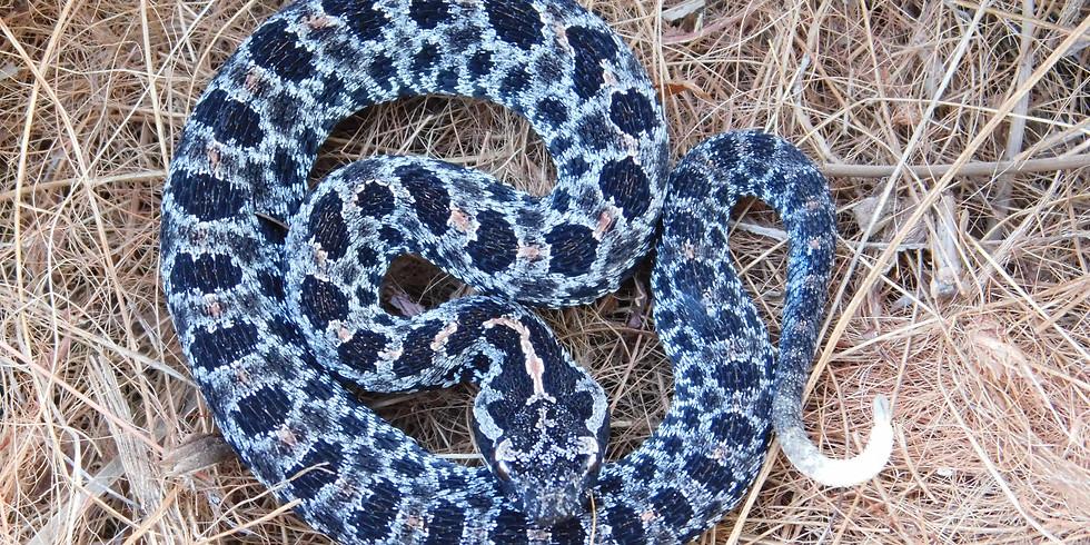 Save The Snakes - Level 1 Venomous Course - Mather, CA